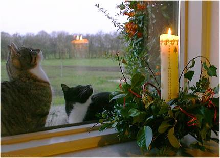 cats at the window
